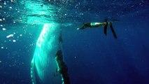 Ce plongeur danse avec une baleine, INCROYABLE !