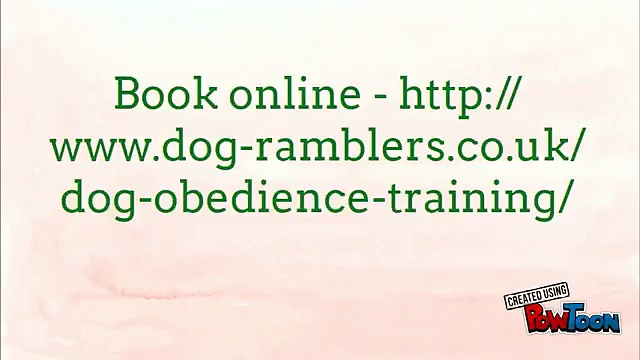 Dog Training Manchester