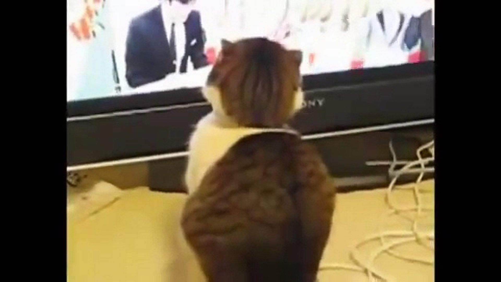 funny cats,funny cat videos,funny animals,funny video,cats funny,funny videos,funny cat
