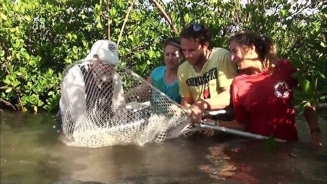 Divocí žraloci -dokument (www.Dokumenty.TV)