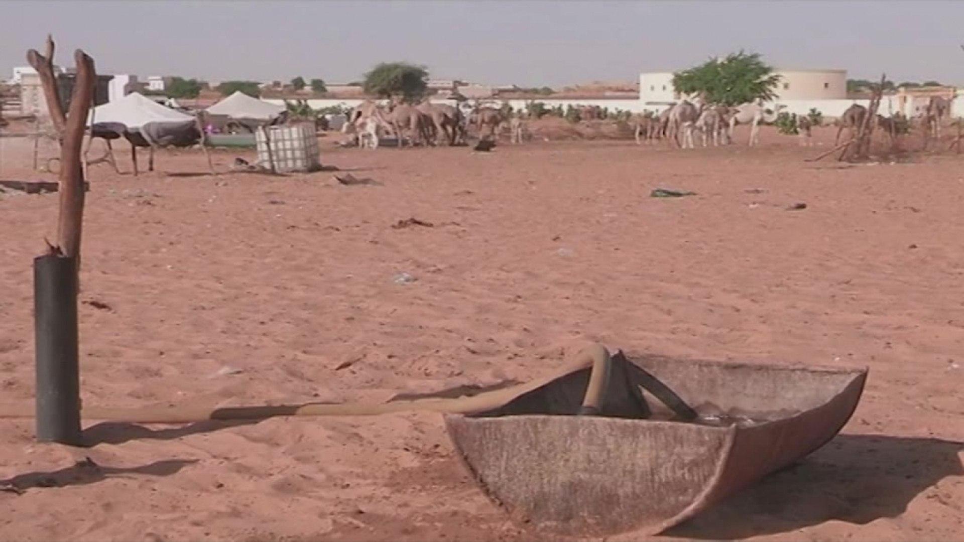 Mauritanie, Les défis de la valorisation de l'élevage