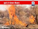 Drought-hit farmers burn their trees, upset with govt apathy