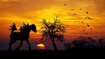 Horse walking, Relaxing sound of horses hooves