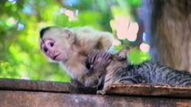 Must Watch!!!Funny Monkey Forcefully Kisses Adorable Cat