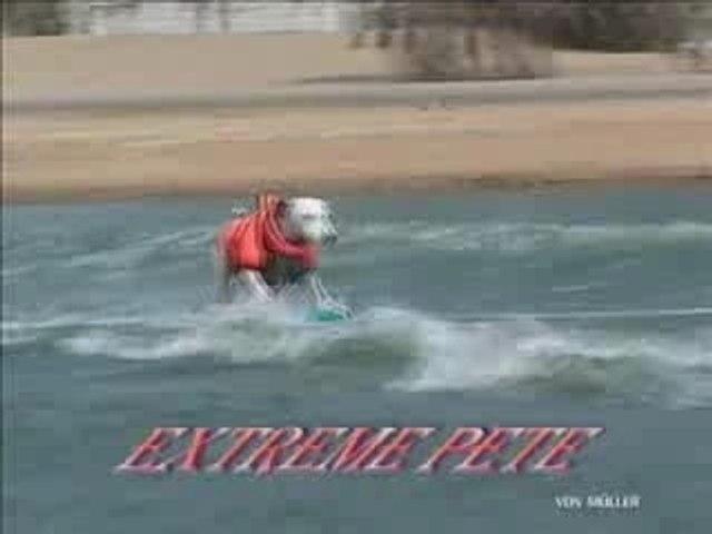 Chien skate surf Dog