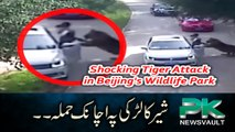 Shocking Tiger Attack in Beijing's Wildlife Park - Clear Footage
