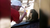 Baboon Is Amazed By Man s Magic Trick !