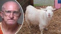Zoophilie aux États-Unis : on l'arrête parce qu'il viole des chèvres