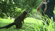 Zoo de Tregomeur : Découverte du métier de soigneur