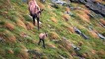 Život v Alpách -dokument (www.Dokumenty.TV)