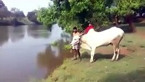 woow what a fantastic jump of this bull... must watch n share-Top Funny Videos-Top Funny Pranks-Funny Fails-ZaidAliT Videos-Viral Videos-WhatsApp Videos-Funny Compilation 2015