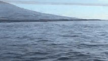Orca Stuns Tourists by Tossing Sea Turtle Out of Water