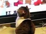 Dünyanın En Komik Hayvanları ¦¦ En Komik Hayvan Videoları İzle