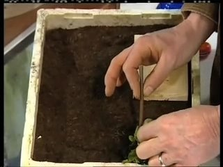 Visionnez les Cours Vidéo de Laitues - Conseils de Jardinage