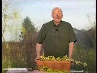 Marcotter ses plantes - Conseils de Jardinage