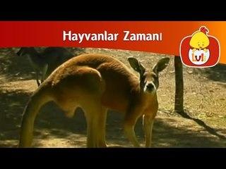 Hayvanlar zamanı - Devekuşu ve kangru, Luli TV