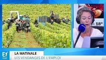 Vendanges : Pole emploi recherche des chômeurs qui aiment le vin
