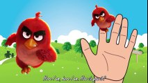Angry Birds Chuck English - Finger Family Nursery Rhymes - Song for Children