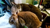 Cute Unlikely Animal Couples Compilation 2014 !