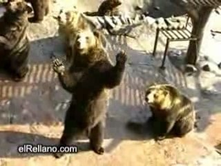 Bears asking for food