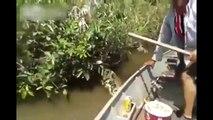 Ce brésilien attrape un serpent géant - Anaconda énorme