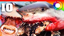 10 อันดับ  ปลาฉลาม สุดยอดสายพันธุ์แปลก สุดน่าทึ่งของโลก !! | Double Colour