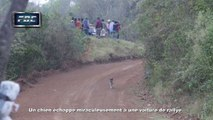 Un chien échappe miraculeusement à une voiture de rallye