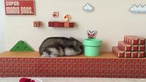 Un hamster passe le premier niveau de Super Mario en vrai