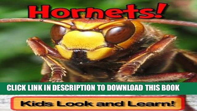 [New] Hornets! Learn About Hornets and Enjoy Colorful Pictures - Look and Learn! (50+ Photos of