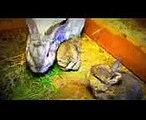 Funny BabyBunny Rabbits   Just 1 week old   Funny Babies Bunnies