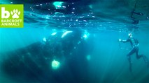 SNAPPED! Inside The Southern Right Whale Migration