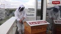 Les abeilles du Point ont-elles fait leur miel ?