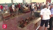 Le marché à la volaille de Samatan vit-il ses dernières années ?