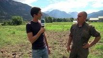 Hautes-Alpes : Le vers blanc véritable cauchemar pour les prairies du Guillestrois
