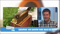 Découvrir les abeilles, le miel et ceux qui le font
