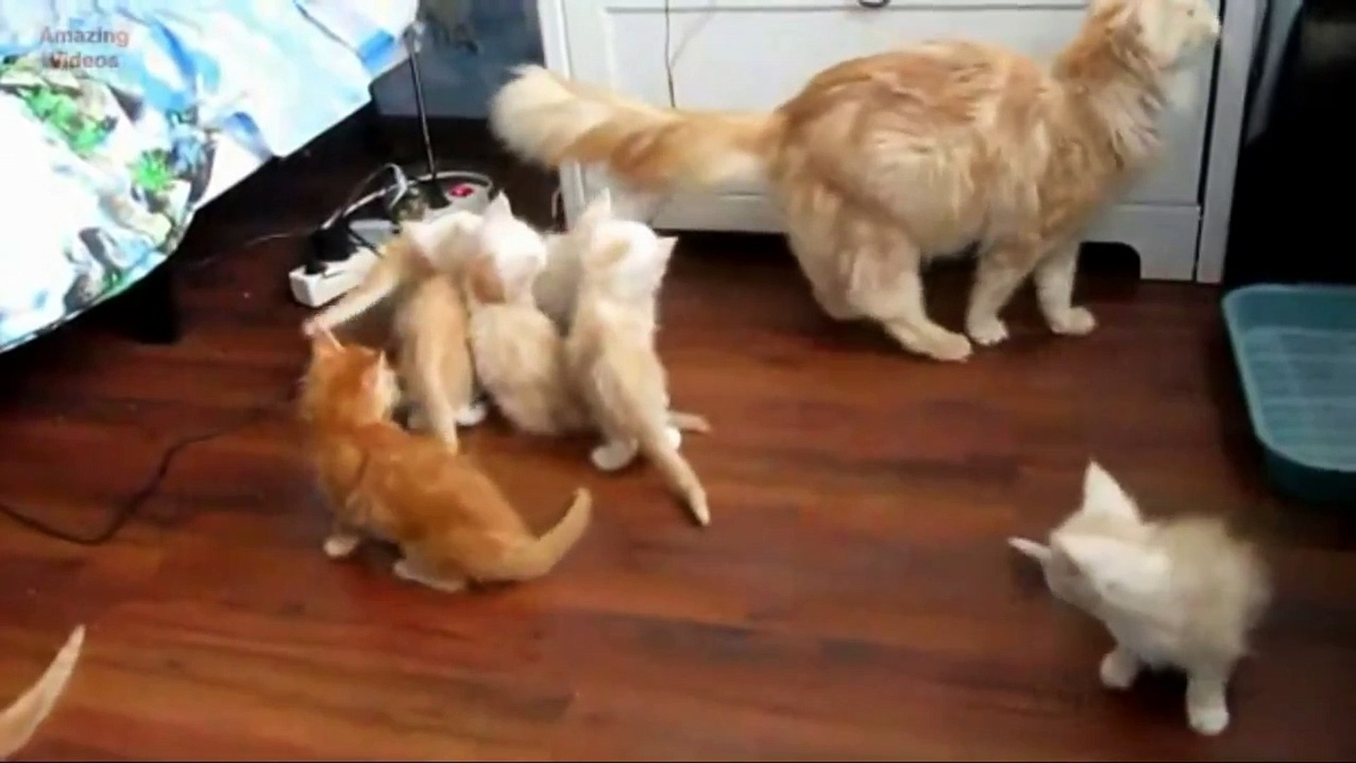 Very Funny Cats Videos |Funny Cats Compilation 2016 HD| Funny Cats Videos Youtube