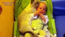 Funny Pets Moments 2016 - Cats and Babies ★ Cat Meets Baby for First Time (HD) [Funny Pets]