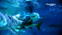 SHARK WEEK - DAY OF THE SHARK - Discovery Channel - Sharks