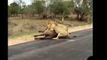 15 CRAZIEST Animal attacks Caught On Camera #2 Most Amazing Wild Animal Attacks Compilation