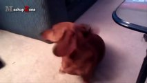 Talking Dogs - A Funny Talking Dog Videos Compilation 2016