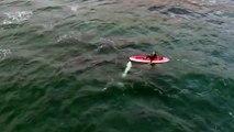 'Playful' killer whale filmed swimming near New Zealand kayaker