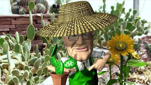 Mein grüner Kaktus