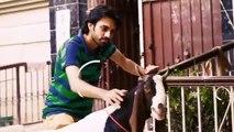 Story Of Bakra Eid Animals Social Media Edition - Bakra Eid 2016 | 3 Idiotz Pakistan