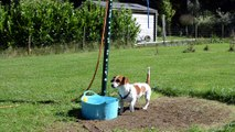 Le chien Bella joue avec son tuyau d'arrosage à Marchin