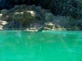 L'ours blanc au Zoo d'Amnéville