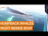 Tourists Get Amazing View of Humpback Whale