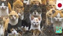 Kucing sit-up, pulau kucing, Kucing melakukan hal-hal keren! - Tomonews