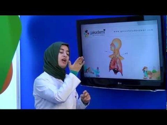 İlköğretim 4. Sınıf Fen ve Teknoloji Eğitim Seti Soluk Alıp Verme