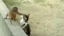 Un bébé singe joue avec un chat