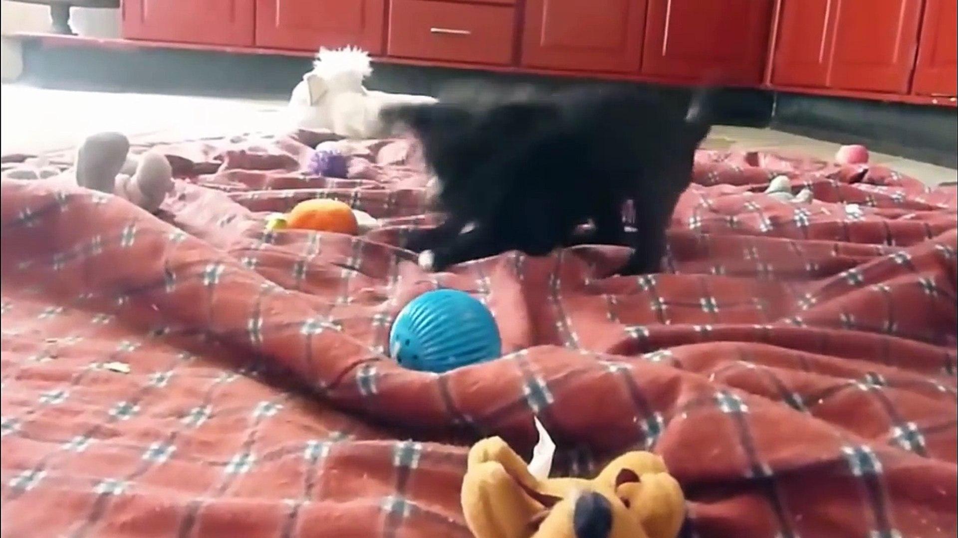 Funny animal videos: Cute Puppy Videos Compilation